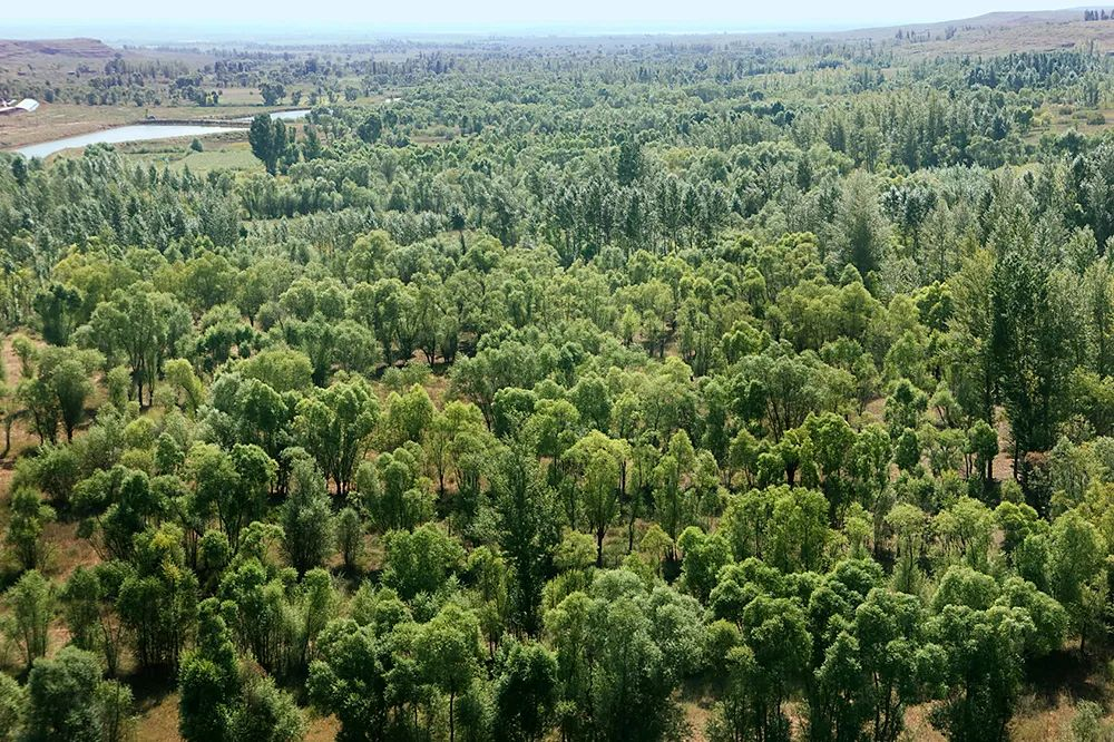 生态大漠 绿色长城