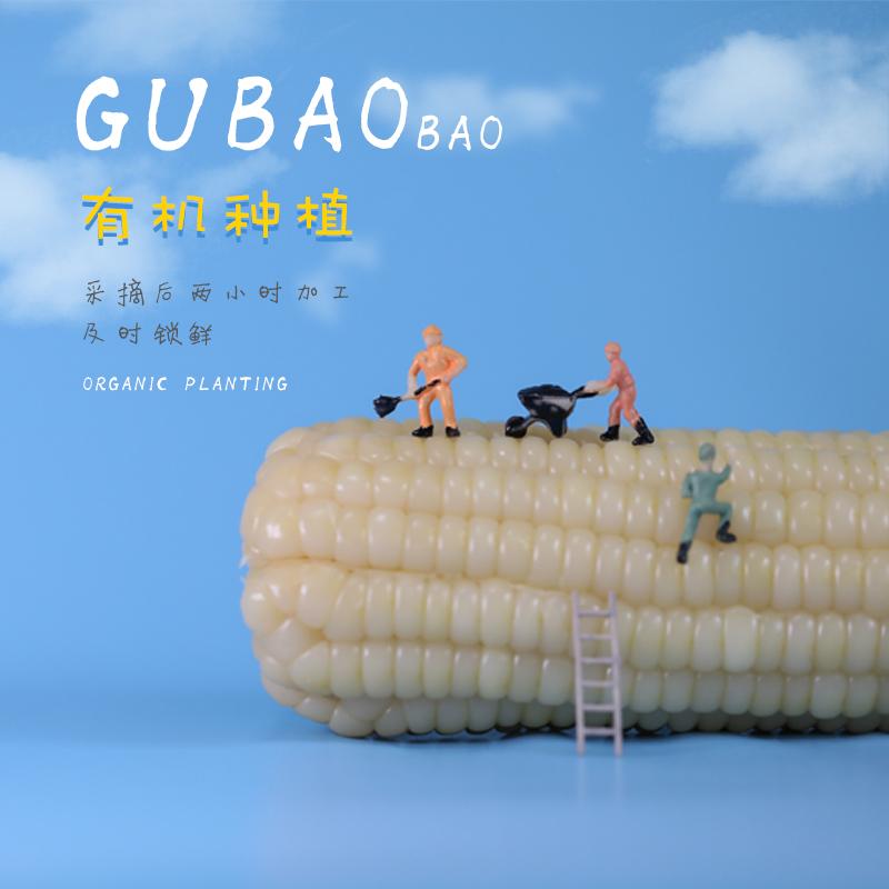 【谷苞苞白糯玉米9支装】新鲜采收真空包装高温灭菌糯玉米