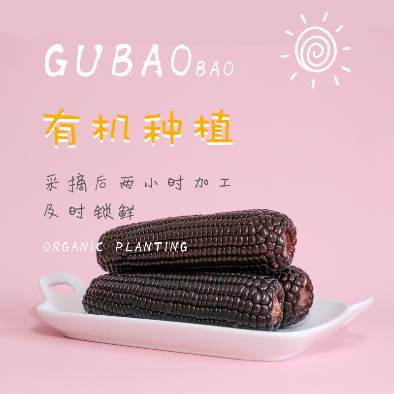 【谷苞苞黑糯玉米真空带皮9支装】富含丰富花青素的玉米